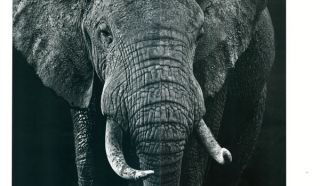 Wild encounters: iconic photographs of the world's vanishing animals and cultures.