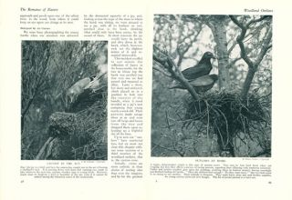 The romance of nature: wild life of the British Isles in picture and story.