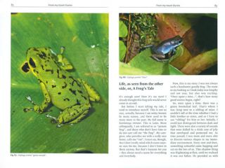 Keeping and breeding Poison frogs: the small species.