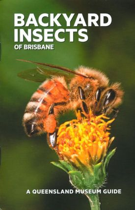 Backyard insects of Brisbane. Chris Burwell