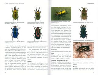 A guide to Stag beetles of Australia.