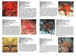 Sea stars of Australasia and their relatives.