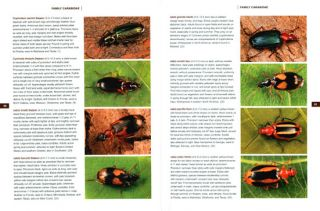 Beetles of eastern North America.
