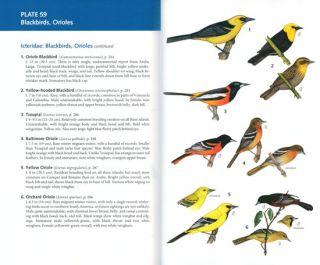 Birds of Aruba, Bonaire, and Curacao: a site and field guide.