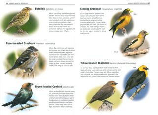 Birds of Europe, North Africa, and the Middle East: a photographic field guide.