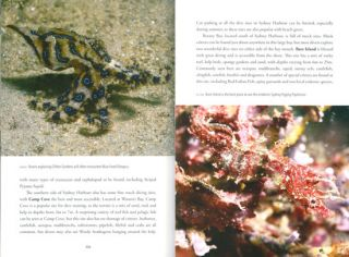 Muck diving: a diver's guide to the wonderful world of critters.