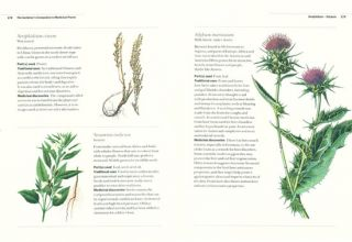 The gardener's companion to medicinal plants: an A-Z of healing plants and home remedies.