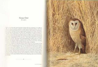The owls of southern Africa.