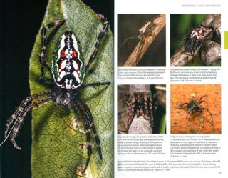 A field guide to spiders of Australia.