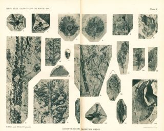 Catalogue of the Caenozoic plants in the Department of Geology British Museum (Natural history), volume one: the Bembridge flora [all published].