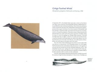Beaked whales: a complete guide to their biology and conservation.