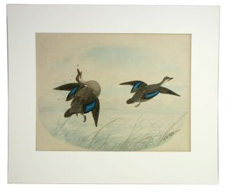 Pair of shot ducks. Neville Henry Pennington Cayley