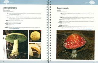 A guide to the common fungi of coastal New South Wales.