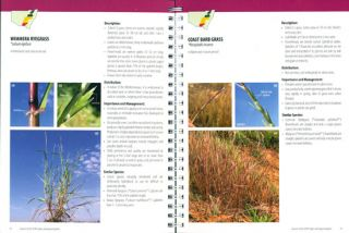 Grasses of the NSW slopes and adjacent plains.