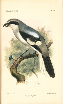 Catalogue of the Passeriformes, or perching birds in the Collection of the British Museum. Coliomorphae: part five, containing the families Paridae and Laniidae (Titmice and Shrikes) and Certhiomorphae (Creepers and Nuthatches).