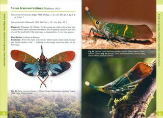 A guide to lanternflies of Borneo.