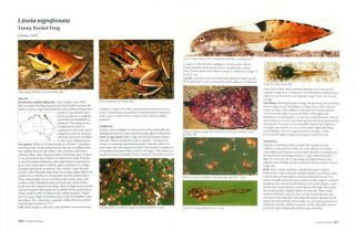 Tadpoles and frogs of Australia.