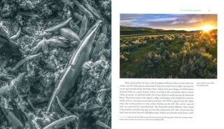 Life at the edge of sight: a photographic exploration of the microbial world.