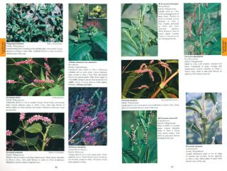Mangroves to mountains: a field guide to the native plants of South-east Queensland.