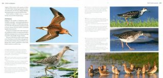 Waders of Europe: a photographic guide.