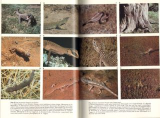 Ecology of reptiles.