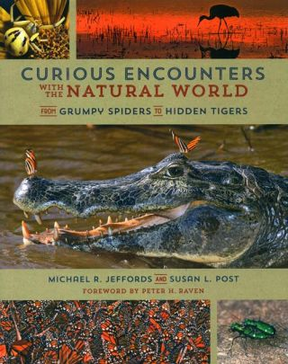 Curious encounters with the natural world: from grumpy spiders to hidden tigers. Michael R....