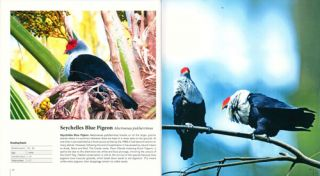 Complete birds of Seychelles.