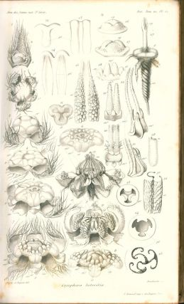 Flower inflorescence [a collection of 14 papers].