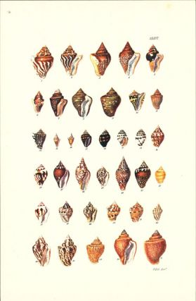 Thesaurus Conchyliorum, or monographs of genera of shells [three parts, facsimile].