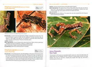 A field guide to the frogs of Borneo.