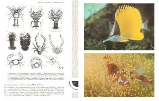A coral reef handbook: a guide to the geology, flora and fauna of the Great Barrier Reef.