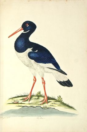 A natural history of British birds.
