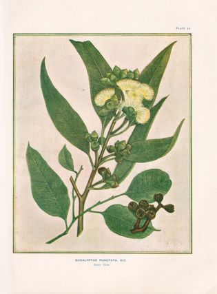 A research on the eucalypts especially in regard to their essential oils.