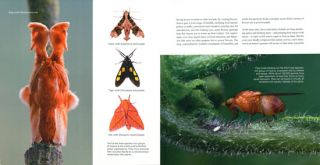 Hidden kingdom: the insect life of Costa Rica.