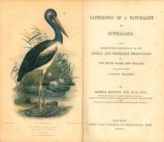 Gatherings of a naturalist in Australasia.
