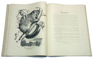 The mammals of Australia, illustrated by Miss Harriett Scott and Mrs Helena Forde, for the Council of Education; with a short account of all the species hitherto described.