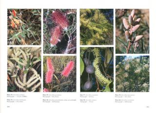 Flora of Australia, volumes 17A, Proteaceae [part two]: Grevillea [and] 17B, Proteaceae [part three]: Hakea to Dryandra.