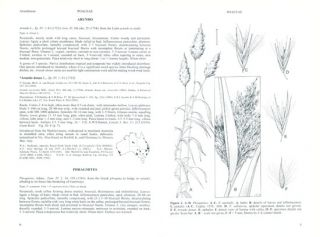 Flora of Australia, Poaceae, [volumes 43, 44A and 44B].