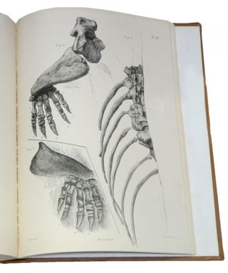 Descriptive and illustrated catalogue of the fossil Reptilia of South Africa in the collection of the British Museum.
