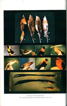 Biology and comparative physiology of birds.