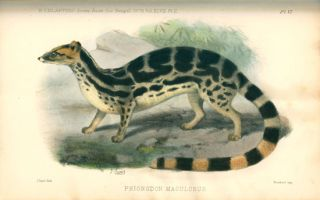A collection of nineteenth century central Asian natural history offprints.