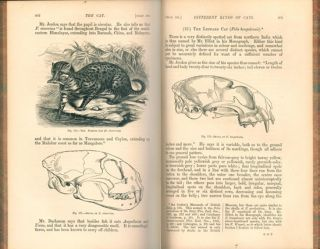 The cat. An introduction to the study of backboned animals, especially mammals.