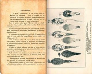 Variations among birds (chiefly game birds).