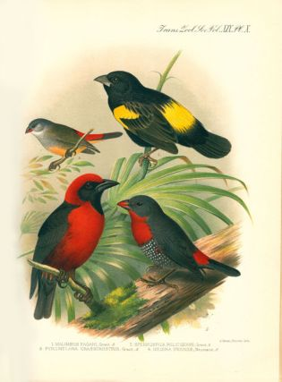Zoological results of the Ruwenzori Expedition, 1905-1906.