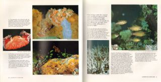 Reader's Digest book of the Great Barrier Reef.