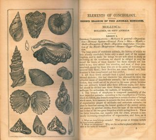 Elements of natural history: embracing zoology, botany and geology; for schools.colleges and families.