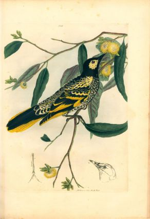 A natural history of the birds of New South Wales, collected, engraved, and faithfully painted after nature.