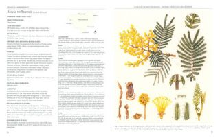 Flora of the Hunter Region: endemic trees and larger shrubs.