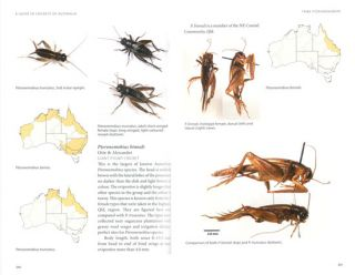 A guide to crickets of Australia.