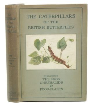 The caterpillars of British butterflies, including the eggs, chrysalids and food-plants. W Stokoe, J.